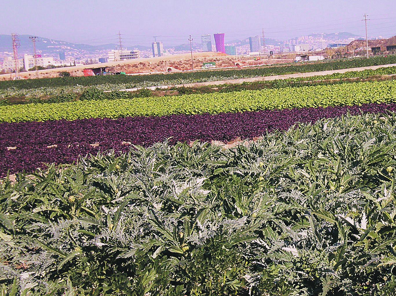 El área metropolitana conserva un rico patrimonio agrícola y forestal.