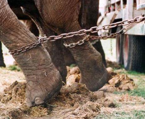 Animals al Circ