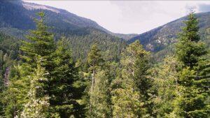 One View relaciona el gasto energético con los árboles que equivalen