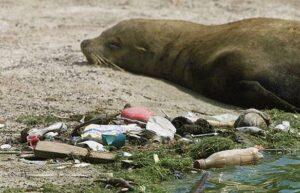 plastic oceà